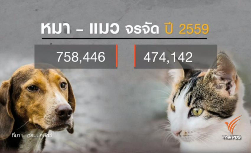 เปิดข้อมูลรอบด้านปมฆ่าหมาจรจัด ช่วยระงับพิษสุนัขบ้า