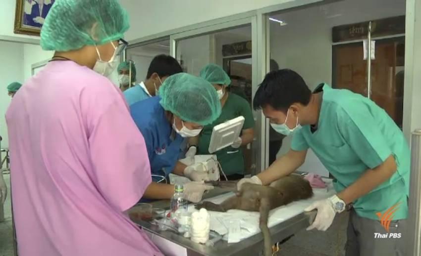 เตรียมฉีดวัคซีนลิงลพบุรีกว่า 3,000 ตัว ป้องกันโรคพิษสุนัขบ้า