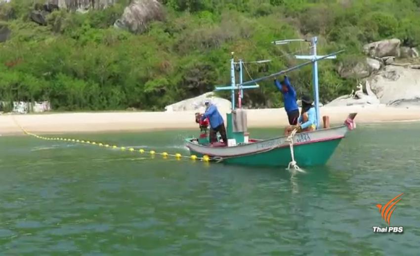 ทช.ทดลองวางทุ่นไข่ปลา ป้องกันฉลามหาดทรายน้อย