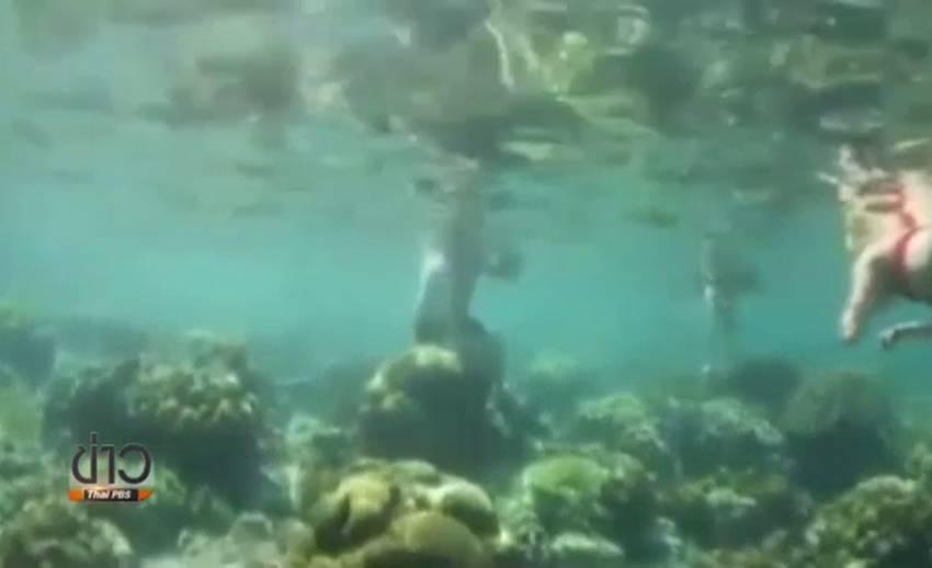 ปรับบริษัทนำเที่ยว ปล่อยนักท่องเที่ยวเหยียบปะการังเกาะพีพี