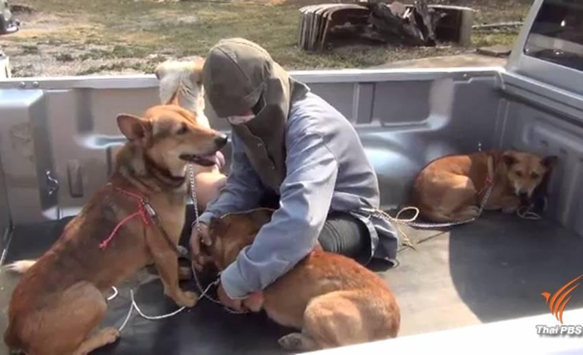 เฝ้าระวังโรคพิษสุนัขบ้าระบาดข้ามแดนจากเมียนมา