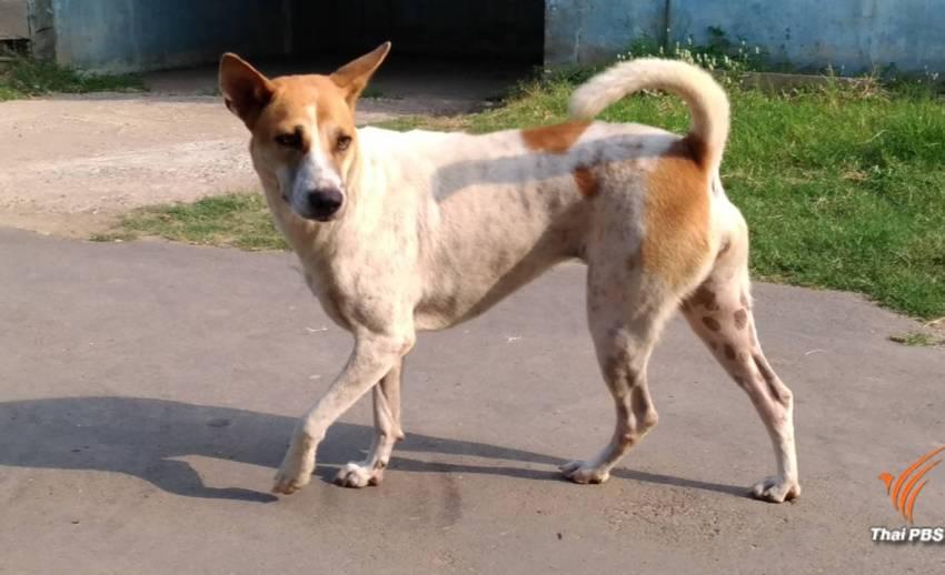 กรมปศุสัตว์ลดพื้นที่ระบาดพิษสุนัขบ้าชั่วคราวเหลือ 29 จังหวัด