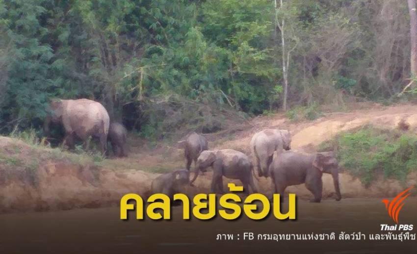 ช้างป่าแก่งกระจาน เล่นน้ำคลายร้อน