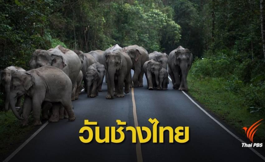 """น่ารัก """"แบบช้างๆ"""" วันช้างไทย"""