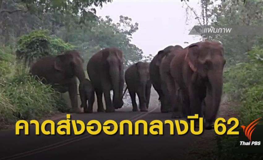 """กรมการค้าต่างประเทศ ปลดล็อกส่งออกช้าง """"เพื่อวิจัย-เชื่อมไมตรี"""""""