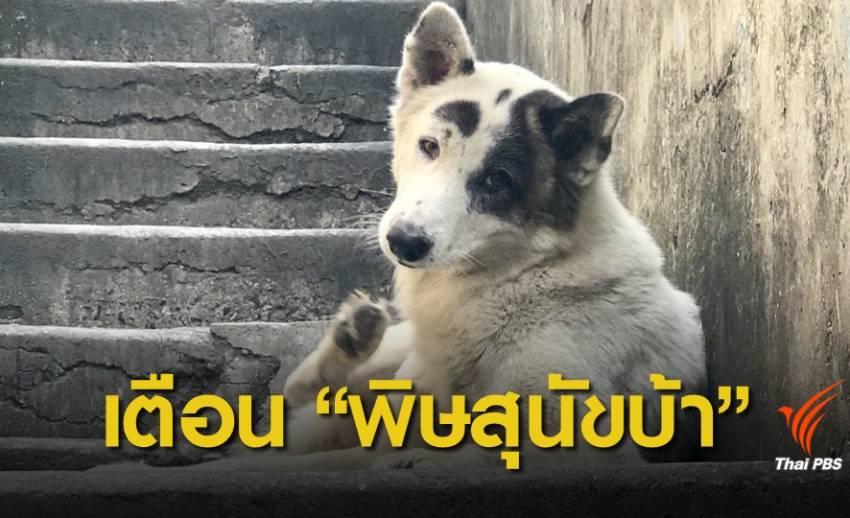 """เตือนระวังเป็น """"พิษสุนัขบ้า"""""""