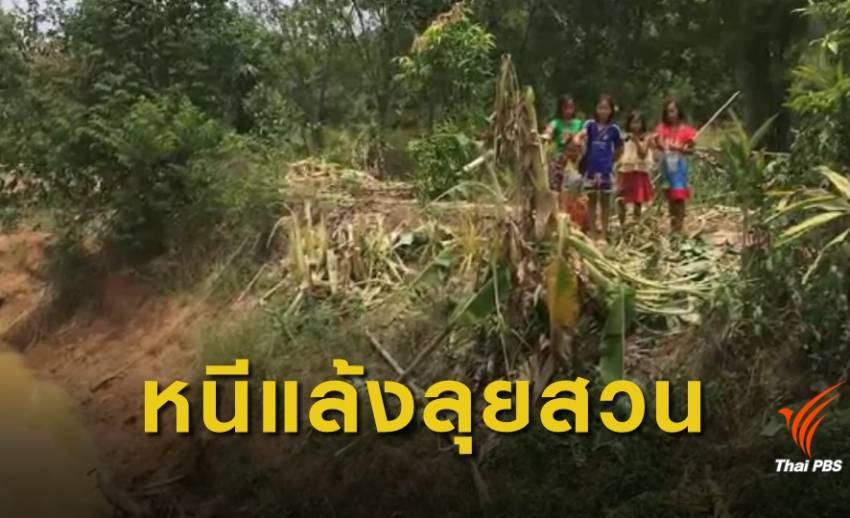 ช้างป่าภูวัวกว่า 10 ตัว บุกกินพืชผลการเกษตรชาวบ้านเสียหาย