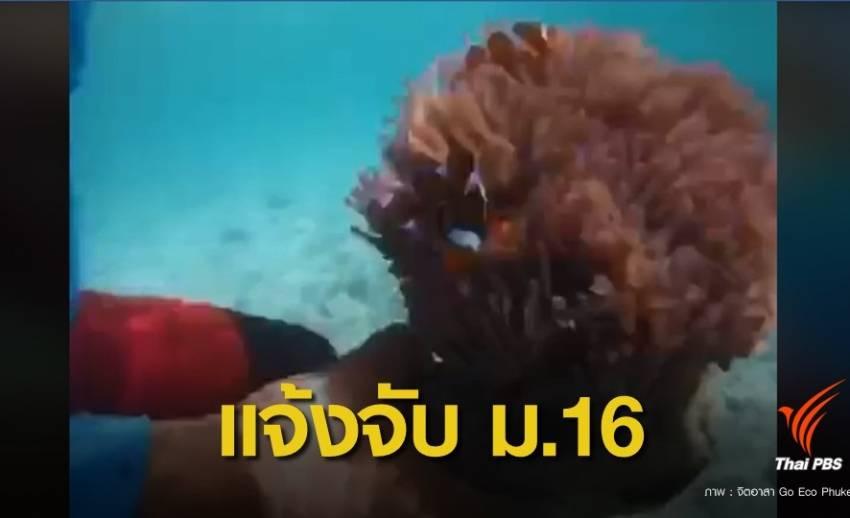 """ทช.สั่งจับไกด์มือบอนล่า """"ดอกไม้ทะเล"""" สัตว์ป่าคุ้มครองเกาะยอ"""