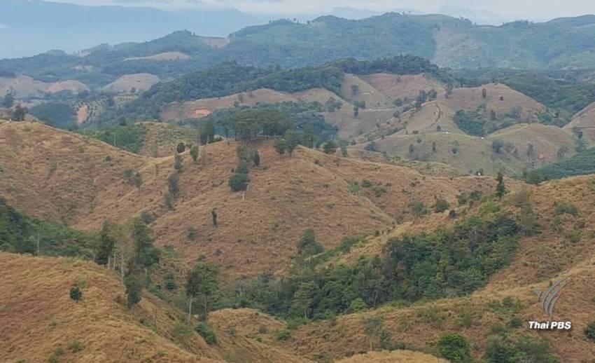 ค้านกฎหมายอุทยาน-สัตว์ป่าฉบับใหม่เปิดช่องนายทุนฮุบป่า