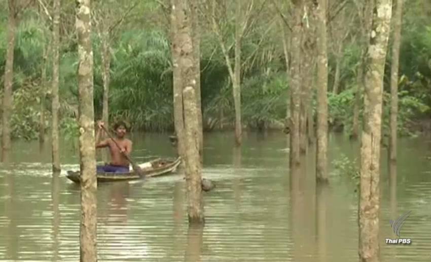 น้ำท่วมสวนยางพารา อ.ชะอวด จ.นครศรีธรรมราชกว่า 1 แสนไร่ ปชช.เดือดร้อนหนัก