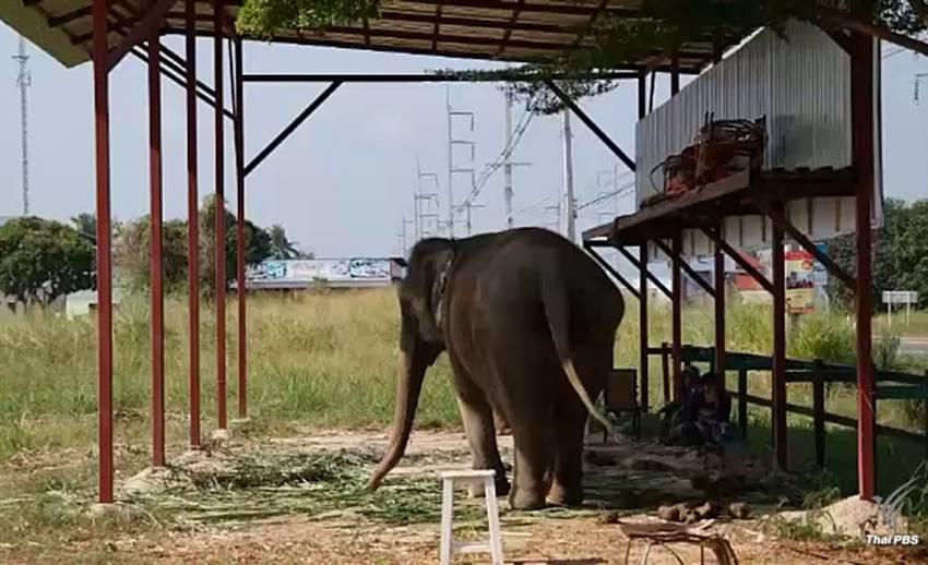 """""""ชุดพญาเสือ"""" เตรียมบุกยึดช้างสวมทะเบียนที่วังช้างอยุธยา"""
