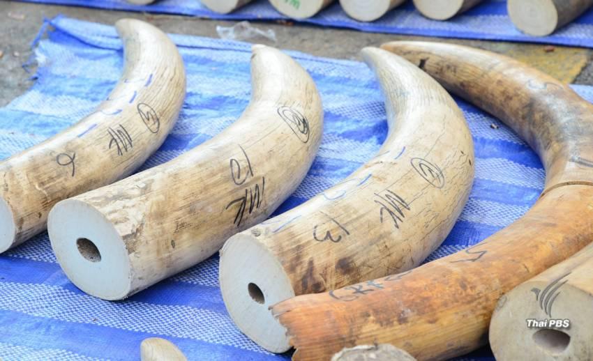 """""""ฮ่องกง """"ประกาศจุดยืนออกกฎหมายยุติการค้างาช้างปี 60"""