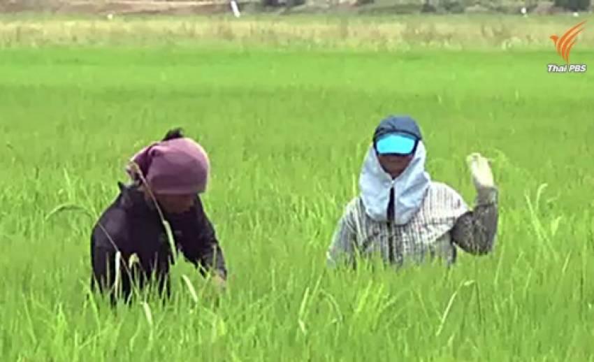 เกษตรกรเสนอแก้คำนิยามในร่าง พ.ร.บ.เกษตรพันธสัญญา