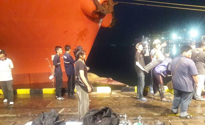 """พบ """"วาฬบรูด้า""""ที่ท่าเรือแหลมฉบัง -คาดถูกเรือชนตาย"""