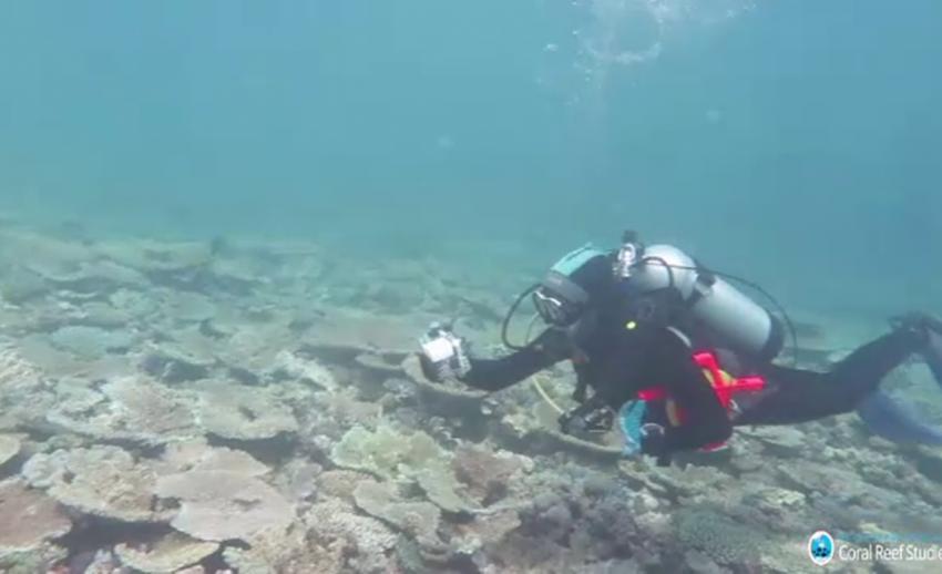 """"""" เกรท แบร์ริเออร์ รีฟ"""" จ่อมรดกโลกในภาวะอันตราย หลังไม่ฟื้นจากปะการังฟอกขาว"""