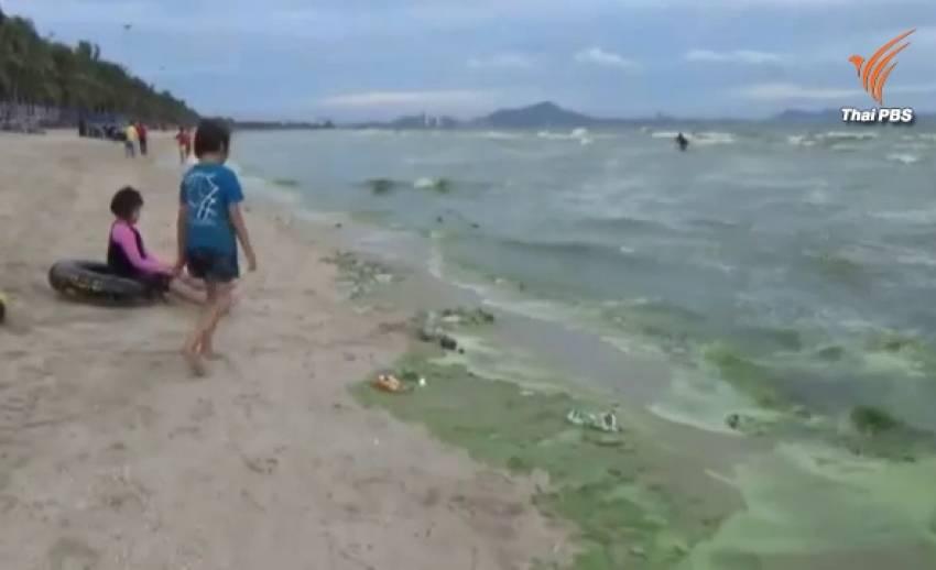 """เกิด """"แพลงก์ตอนบลูม"""" หาดบางแสน ไม่อันตราย-คาดจะหายไปใน 2 สัปดาห์"""
