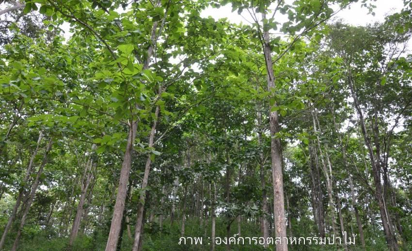 อ.อ.ป.เสนอเพิ่มป่าเศรษฐกิจอีก 40 ล้านไร่ สร้างรายได้-ลดการทำไม้เถื่อน