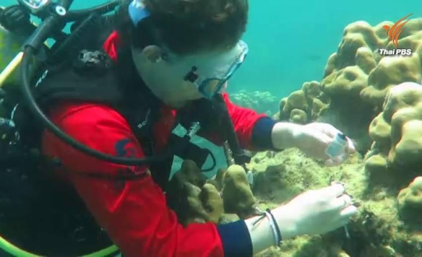 """สำรวจปะการังฟอกขาวใต้อันดามัน พบเพิ่มที่ """"เกาะไก่"""" เพราะอุณหภูมิน้ำเพิ่ม"""