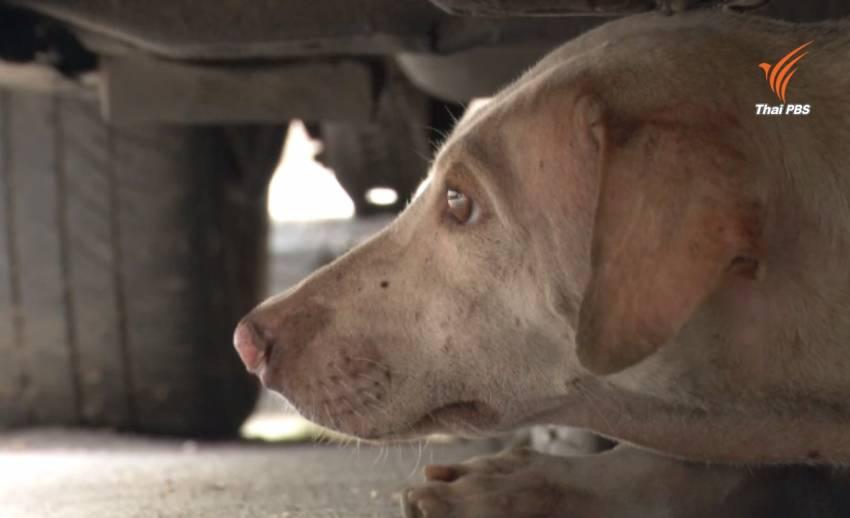 หารือแก้ปัญหาสุนัขจรจัดแฟลตตำรวจ