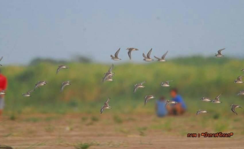จีนปล่อยน้ำโขงจากเขื่อนทำน้ำท่วมผิดฤดูกาล กระทบนกประจำถิ่น-นกอพยพ