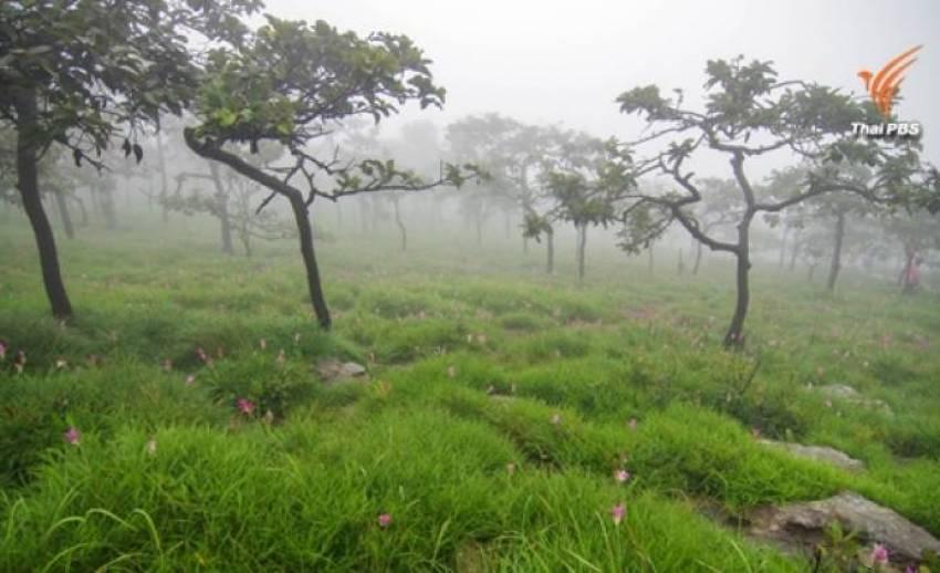 กรมอุตุฯ เผยไทยตอนบนอากาศเย็นในตอนเช้า-ภาคใต้ยังมีฝน