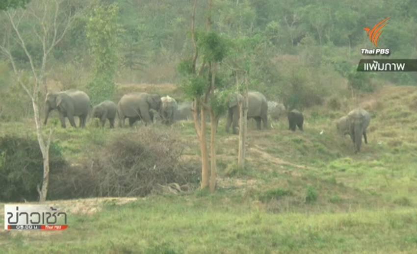 อุทยานแห่งชาติฯ เร่งสร้างกระทะน้ำช่วยเหลือสัตว์ป่าเผชิญวิกฤตแล้ง