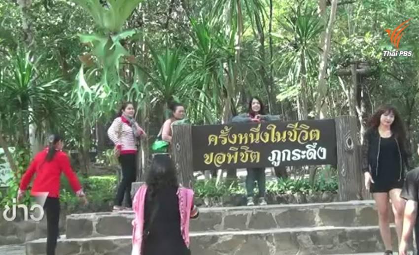 นักท่องเที่ยวไม่เห็นด้วยแนวคิดสร้างกระเช้าขึ้นภูกระดึง หวั่นกระทบสิ่งแวดล้อม-สัตว์ป่า