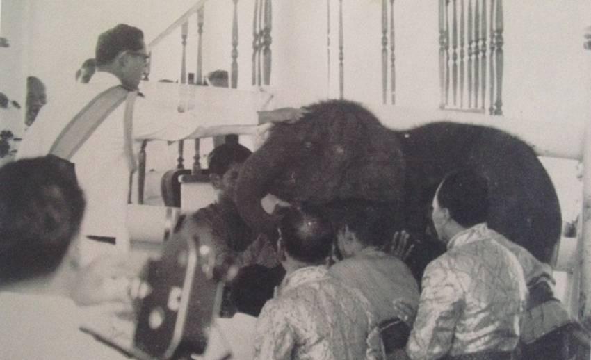 """เรื่องเล่าจากอดีตเด็กเลี้ยงช้างถึงพระราชกระแสรับสั่ง """"พระเศวต แล้วเจอกันนะ"""""""
