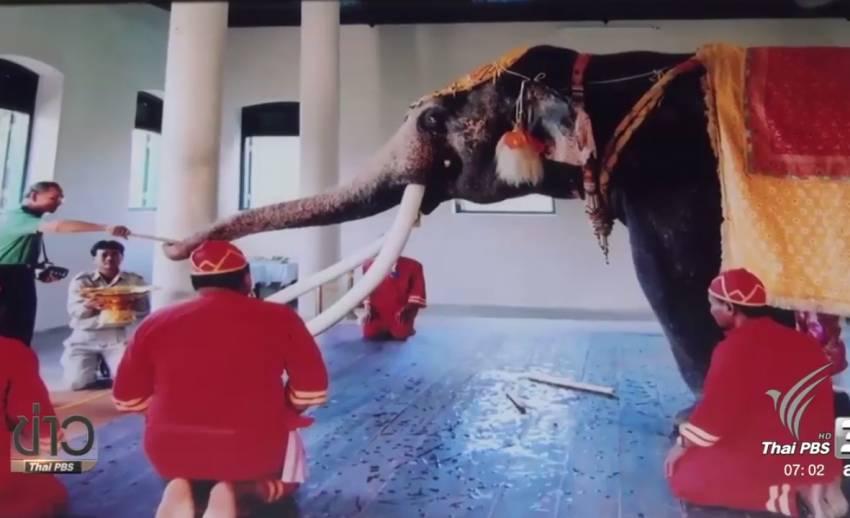 """""""จะดูแลช้างของพระองค์ให้ดีที่สุด"""" คำมั่นจากสัตวแพทย์ ศูนย์อนุรักษ์ช้างไทย"""
