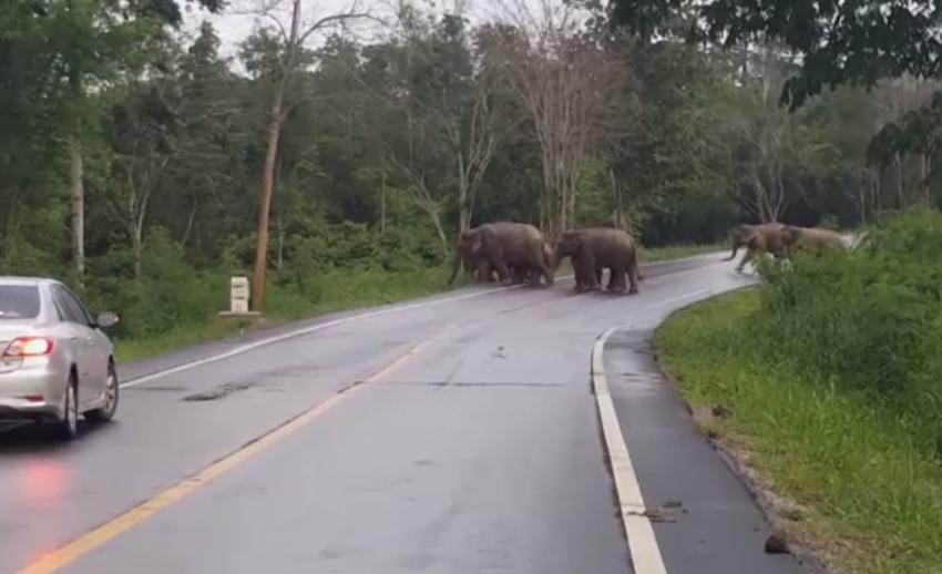 จนท.อุทยานฯ แก่งกระจานเตือนนักท่องเที่ยวระวังช้างป่า จ.ประจวบคีรีขันธ์