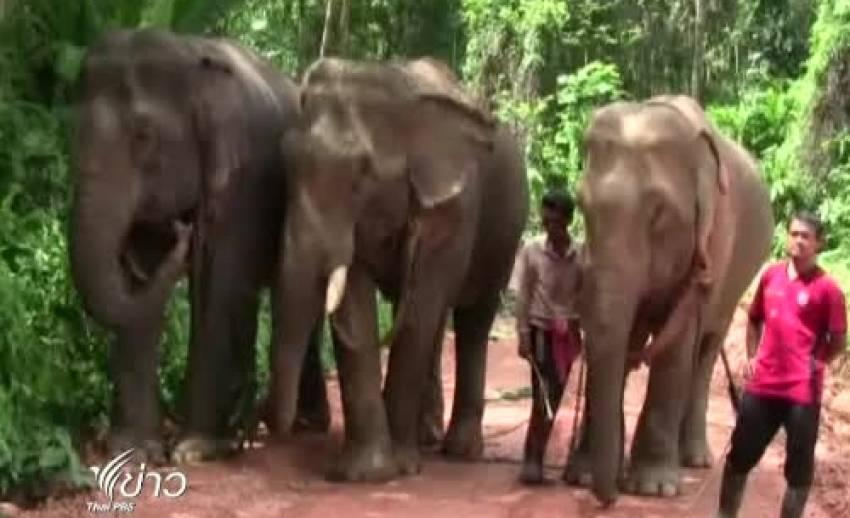 เตรียมนำช้างบุกทำเนียบฯ ค้านกฎหมายสัตว์ป่าสงวนฯ