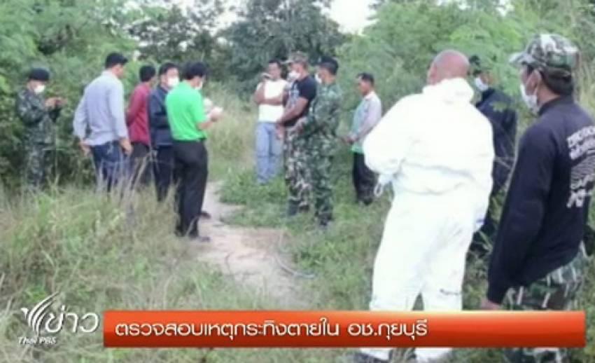 จนท.ตรวจสอบเหตุกระทิงตาย ในอุทยานแห่งชาติกุยบุรี จ.ประจวบฯ