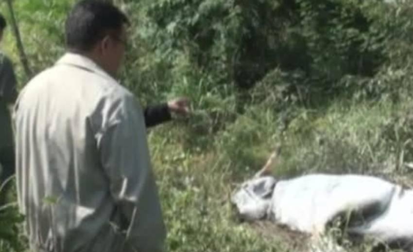 จนท.พบกระทิงป่าตายเพิ่มในป่าสงวนแห่งชาติ ป่ากุยบุรี อีก 4 ตัว