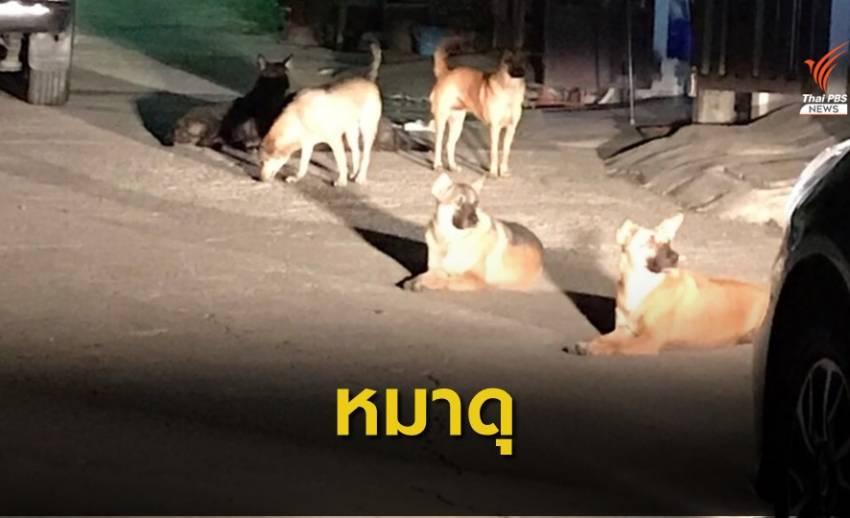 หมาจรจัด 7 ตัวไล่กัดคนในชุมชน  ซอยแบริ่ง 31/1