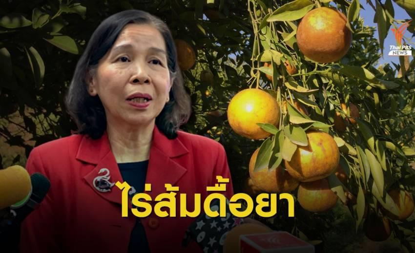 """เจอยาปฎิชีวนะคน ใช้ใน """"สวนส้ม"""" ตกค้างนาน 90 วัน"""