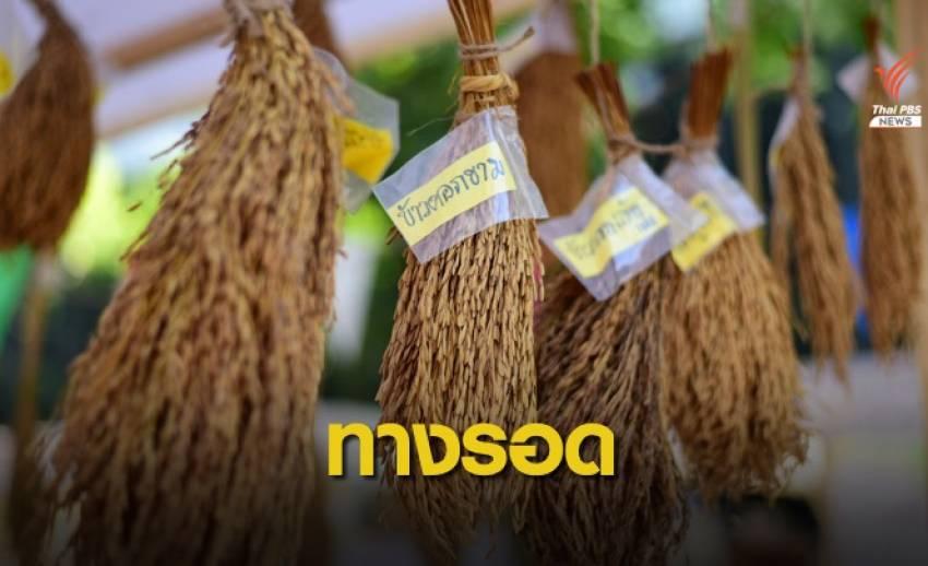 ทางเลือก - ทางรอด ข้าวไทยในตลาดโลก