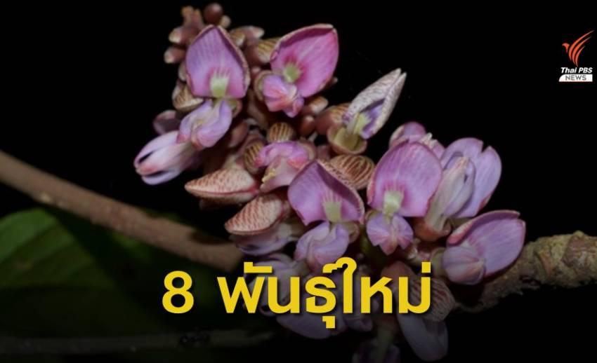 ค้นพบพืชพันธุ์ใหม่ของโลก 8 ชนิดในไทย