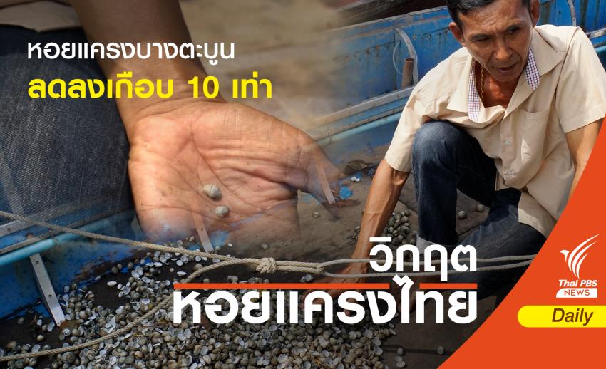 หอยแครงบางตะบูน จ.เพชรบุรี ผลผลิตลดลงเกือบ 10 เท่า