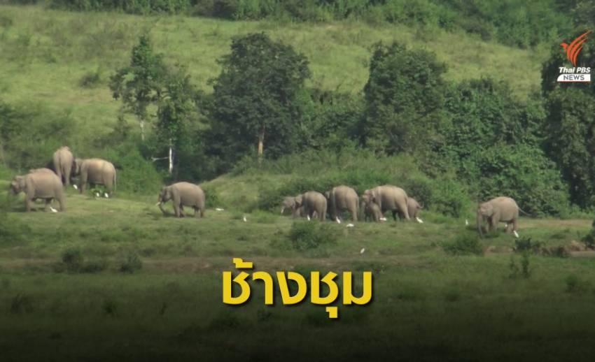 เตือนเที่ยวอช.กุยบุรีระวังสัตว์ป่า