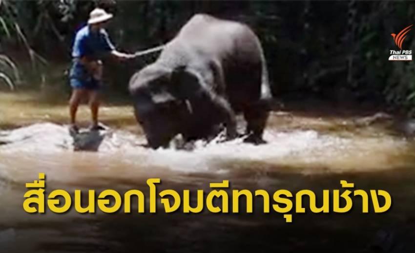 ปางช้างแม่สา จ.เชียงใหม่ ชี้แจง หลังสื่อนอกโจมตีทารุณช้าง