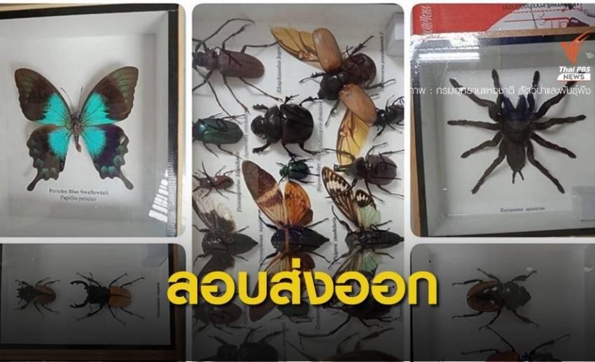 ยึดพัสดุตีกลับซุกผีเสื้อ-แมลงลอบส่งนอกประเทศ