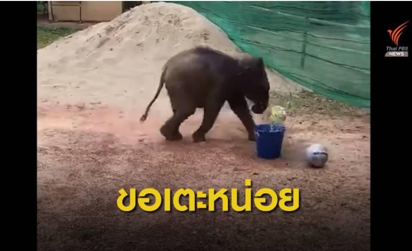 """""""ช้างชบาแก้ว"""" เตะบอลเสริมพัฒนาการ-ลดเครียด"""