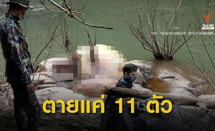 11 วันภารกิจ กู้ซากที่ 4  และ 5 ช้างป่าตกน้ำตกเหวนรก สำเร็จ