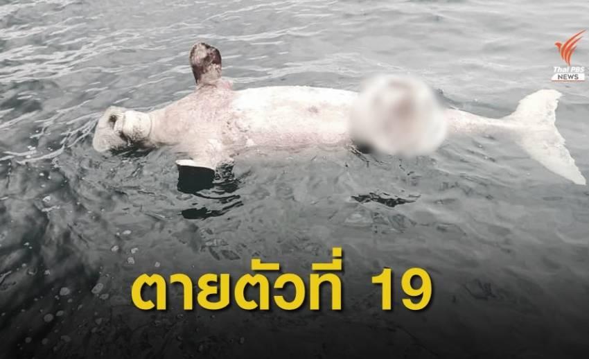 """พบซาก """"พะยูน"""" ลอยระหว่างเกาะยา-เกาะไหง คาดตายแล้ว 5-7 วัน"""