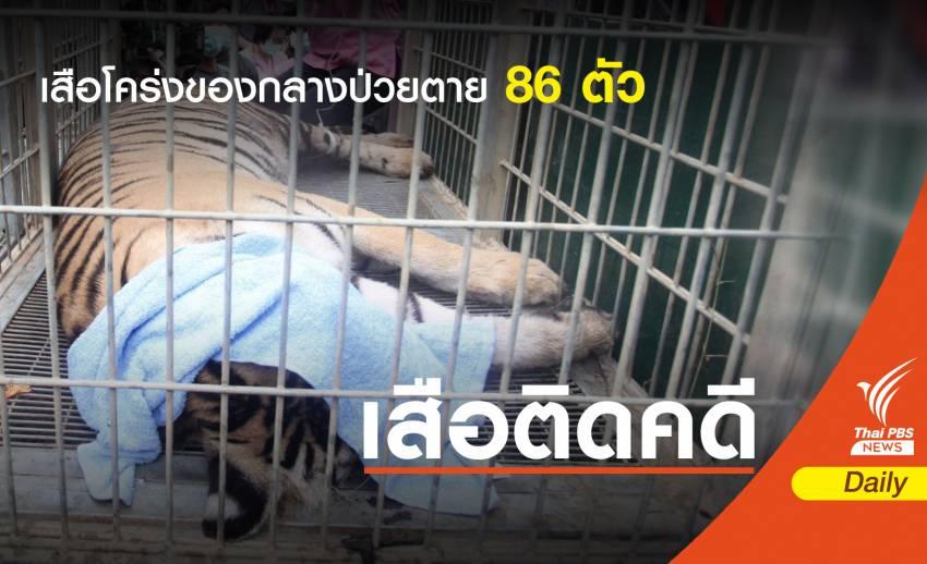 """""""เสือโคร่ง"""" ของกลางป่วยหัดสุนัข-อัมพาตลิ้นกล่องเสียงตาย 86 ตัว"""