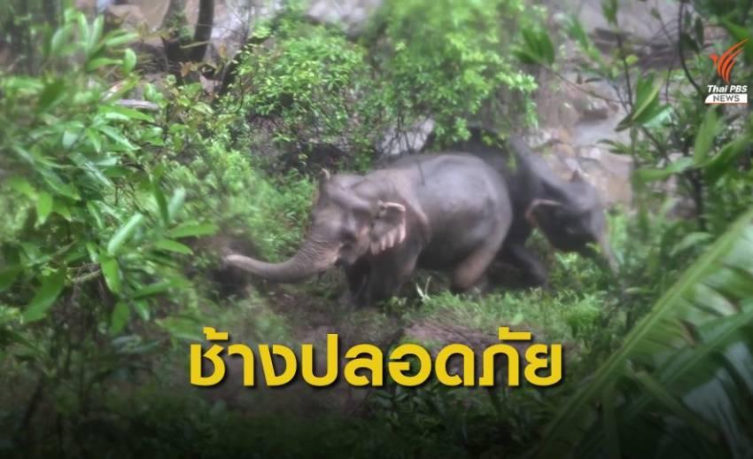 พบร่องรอยช้างป่า 2 แม่ลูกที่พลัดตกเหวยังปลอดภัย