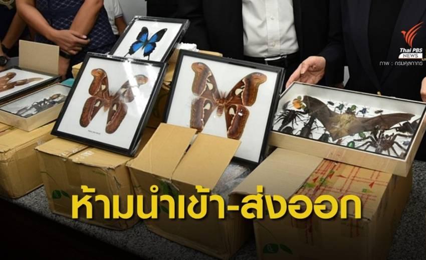 ยึดผีเสื้อ-แมลงสัตว์ป่าในพัสดุตีกลับจากสหรัฐฯ พบต้นทาง จ.พะเยา