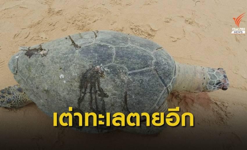 พบเต่าทะเลกินขยะ ทยอยตายเป็นตัวที่ 9