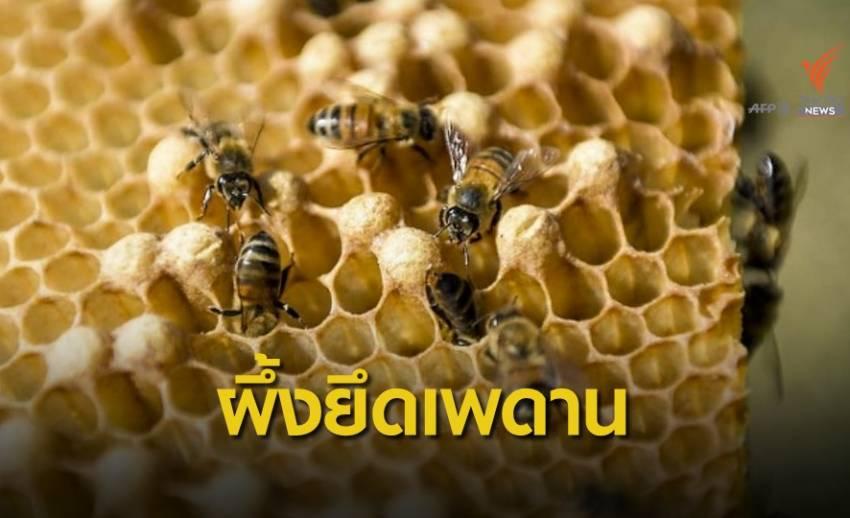 ทัพรังผึ้งใต้ฝ้าเพดานในออสเตรเลีย