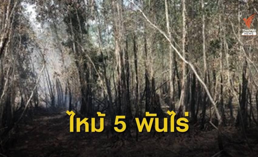 ปี 62 ไฟไหม้ป่าพรุควนเคร็ง 87 ครั้ง เสียพื้นที่ป่าเกือบ 5,000 ไร่